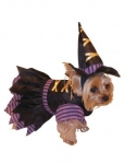 Ведьмочка Dog
